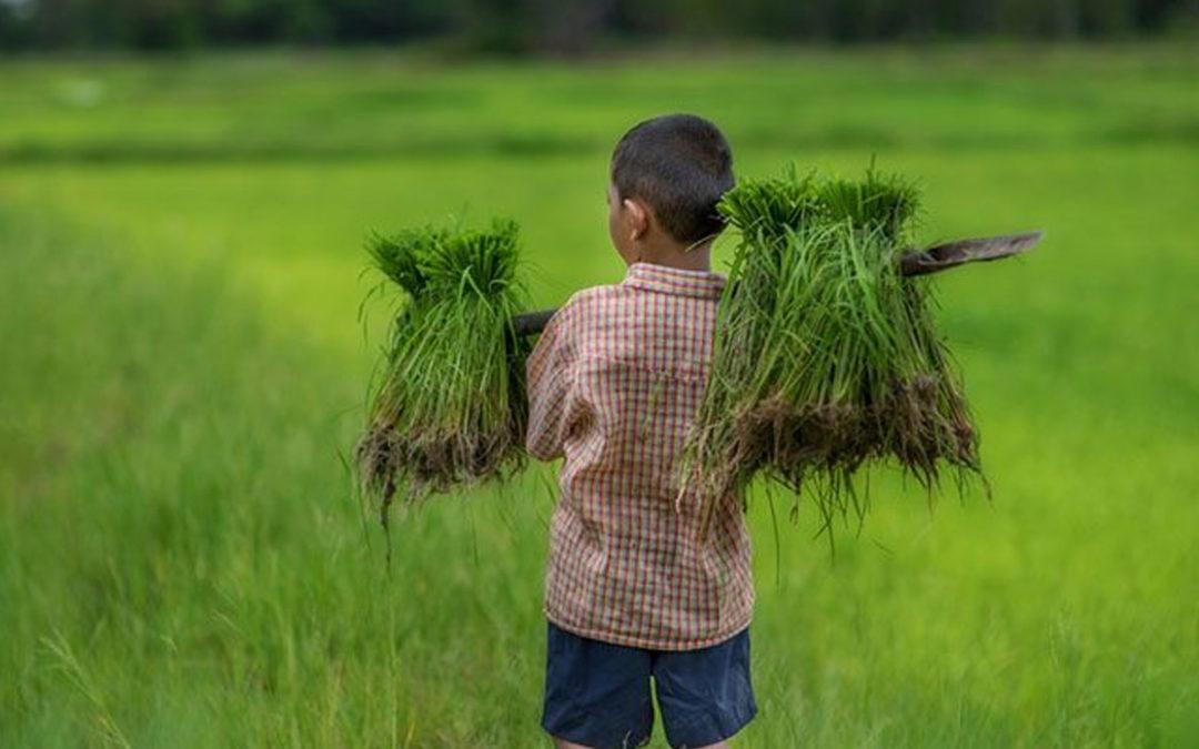 Trabalho infantil, vale para a Aposentadoria? STJ admite o tempo